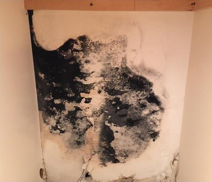 Mold Remediation Reduce Your Risk of Mold By Repairing Leaky Appliances