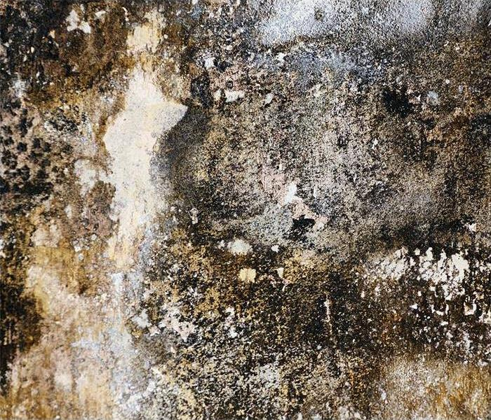 Mold Remediation Dos and Don'ts After Mold